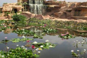 parc à crocodile à Agadir Maroc